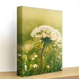 Printed Stretched Canvas